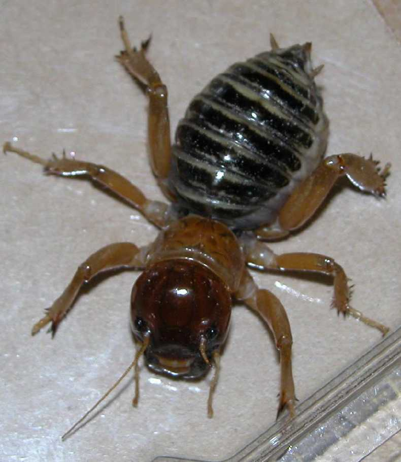 More about potato bugs